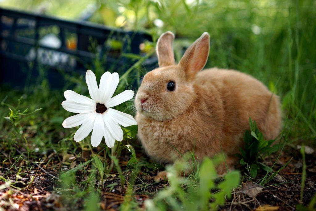 Трава для кролика