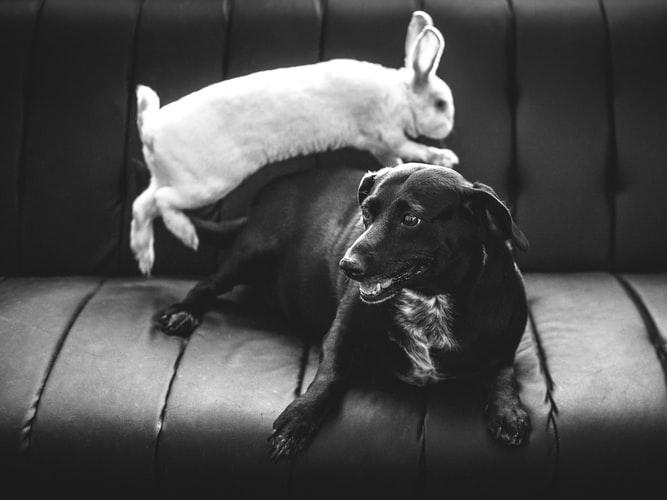 Кролики и другие животные