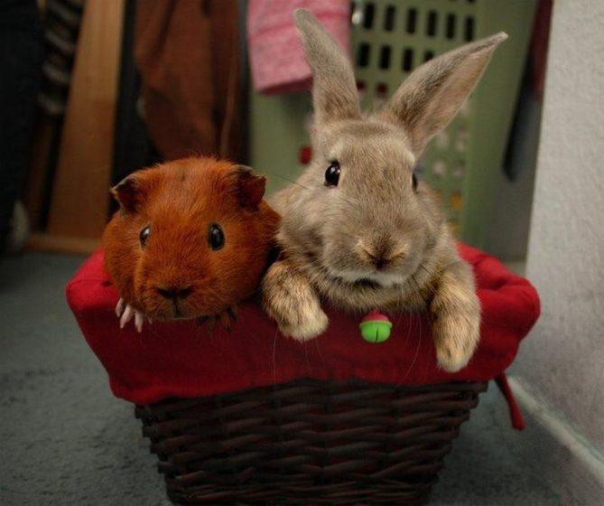 Кролик и другие животные