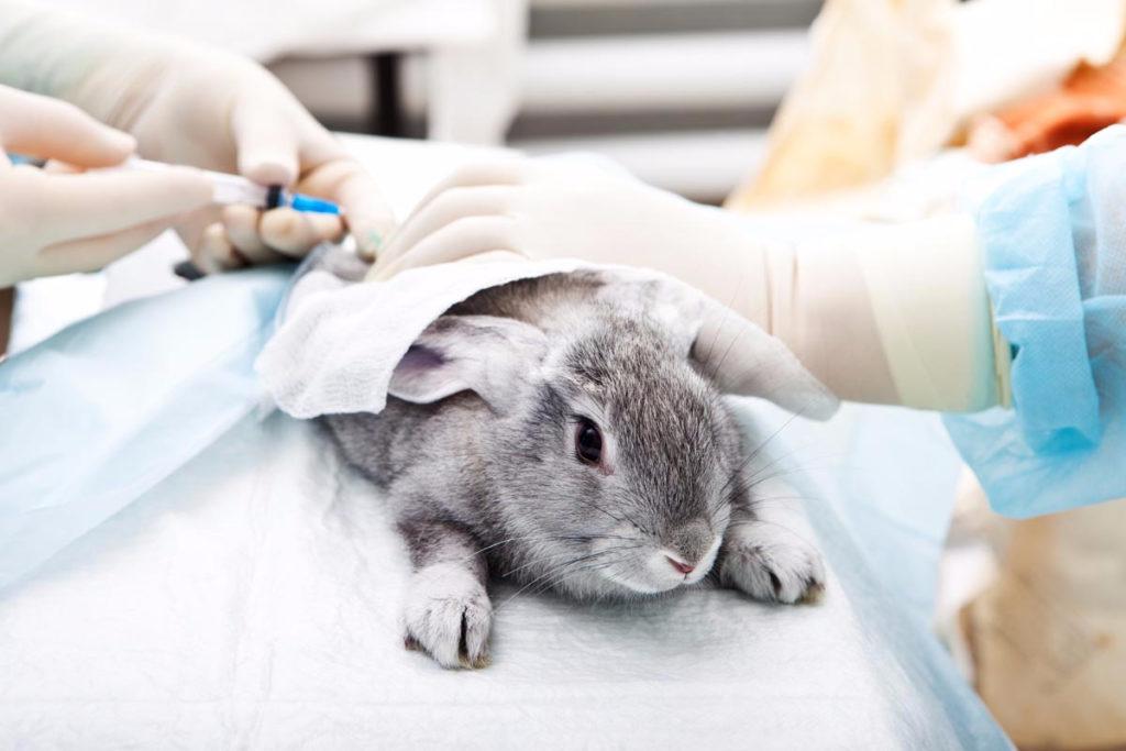 Ветеринарные услуги.