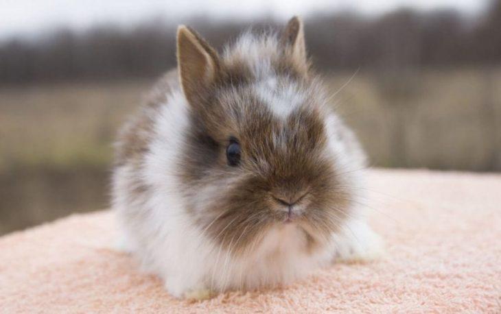 Воняют ли кролики