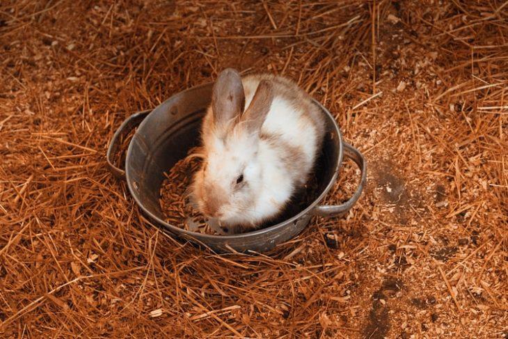 Везем кролика домой