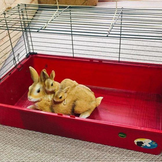 Выпускаем кролика из клетки