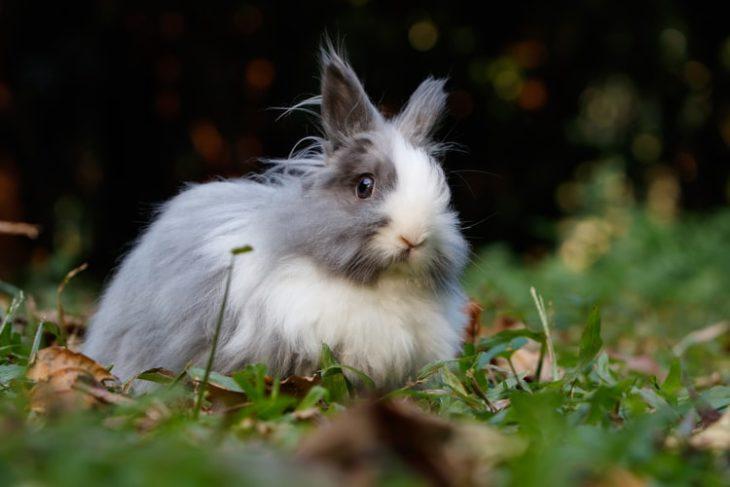 Добрый кролик