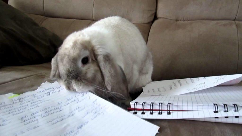 Кролик грызет бумагу