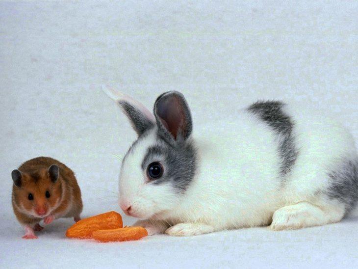 Кролик и мыши