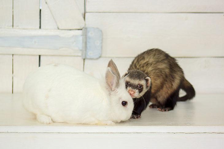 Кролик и харек