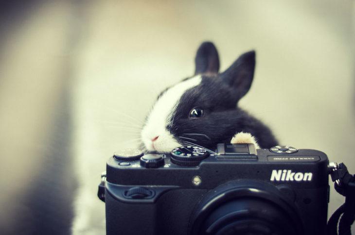 Кролик фотографируется