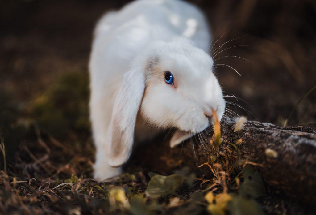Кролик шкодит