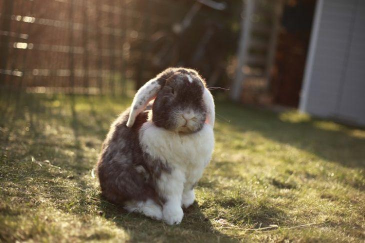 Фотографируем кролика