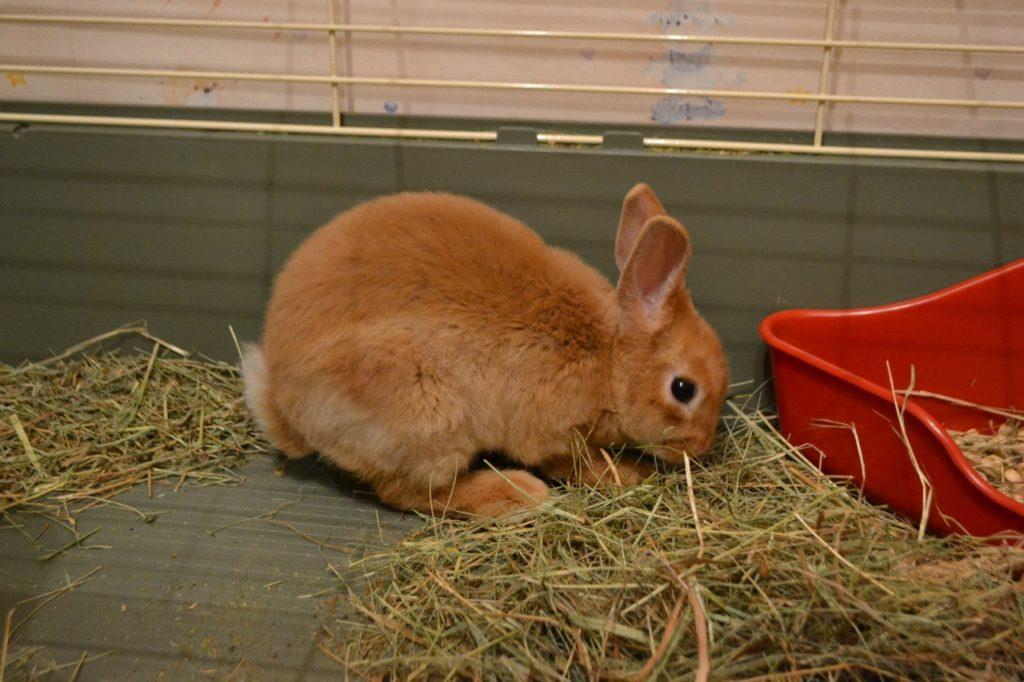 Ферма декоративных кроликов