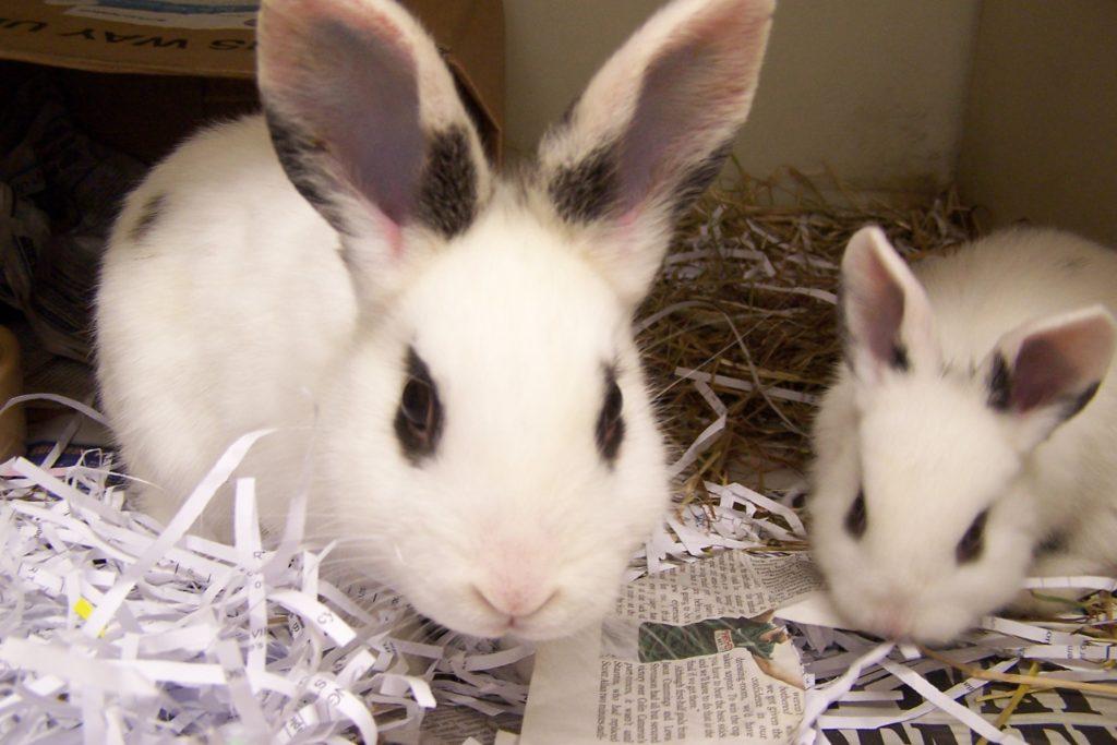 Проблемы заводчиков кроликов