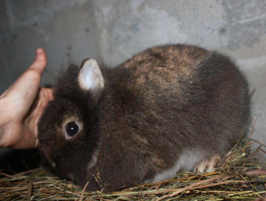 Заводчики карликовых кроликов