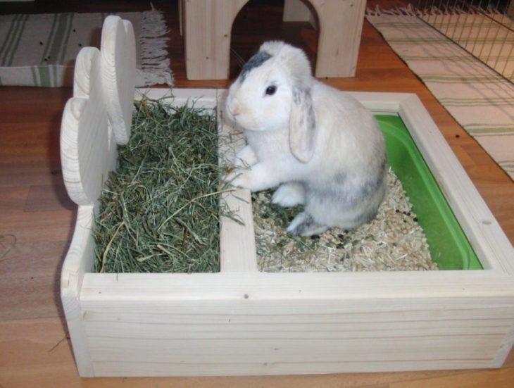 Кролик и туалет