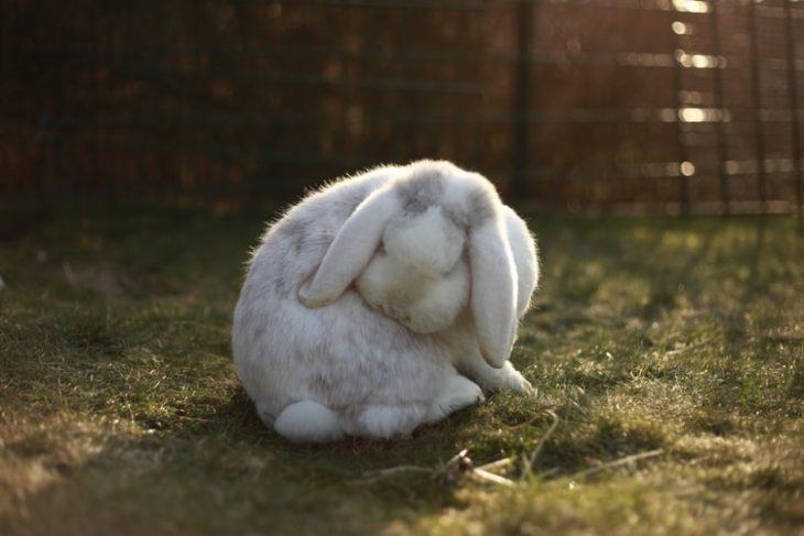 Кролик один