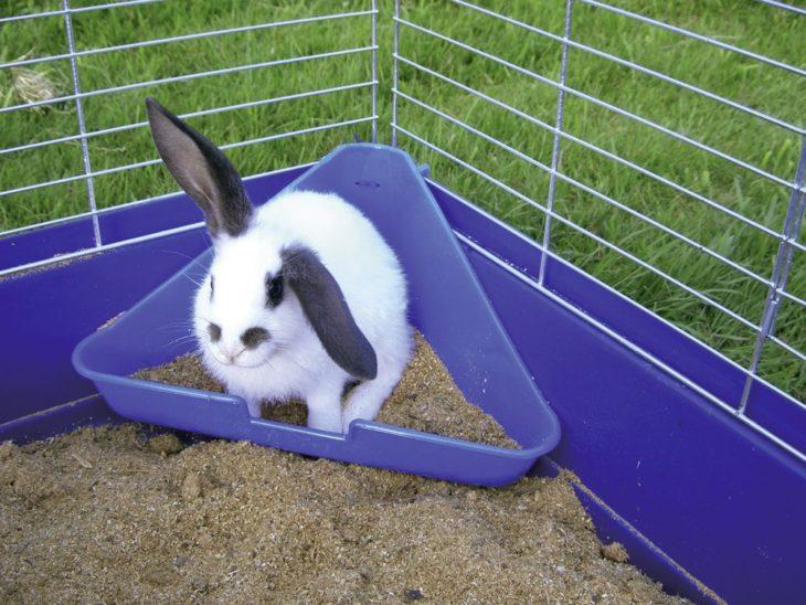 Кролик ходит в лоток