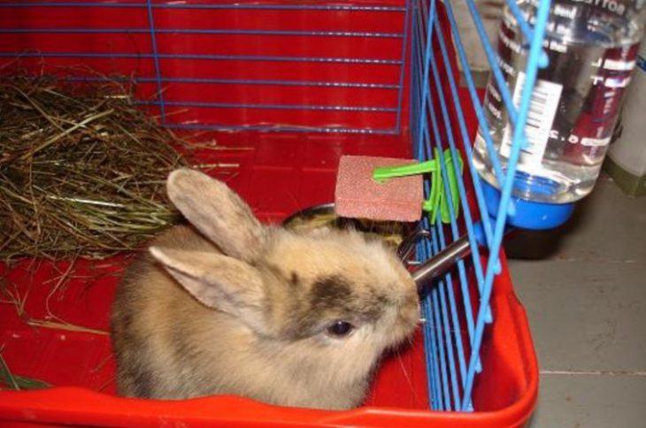 Поилка и кролик
