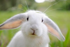Покупаем кролика