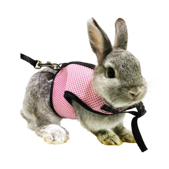 Картинки поводок для кроликов