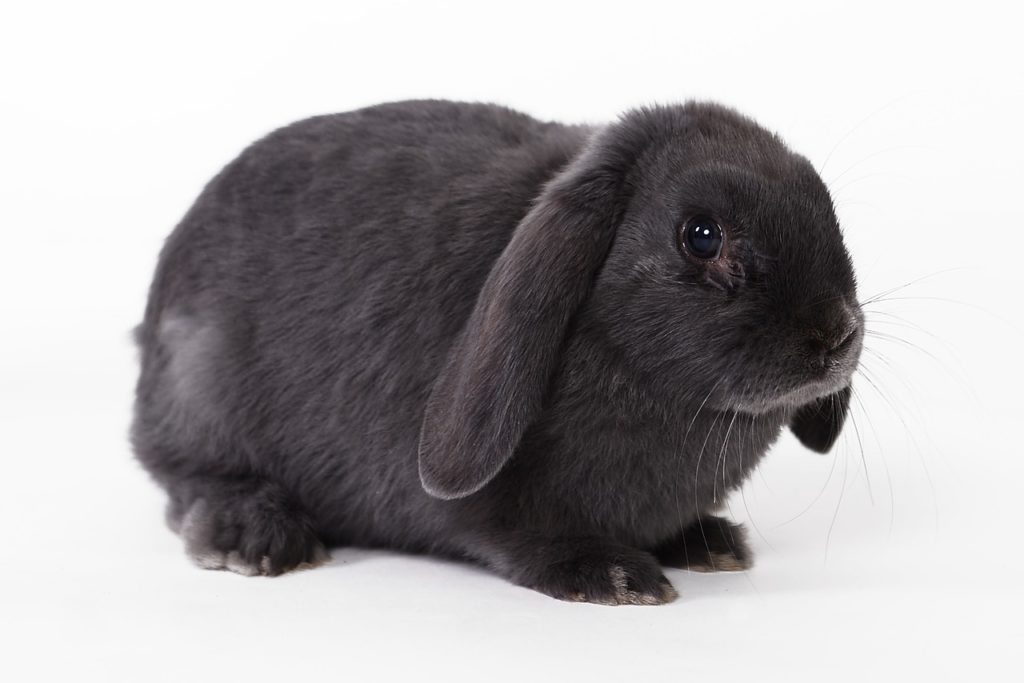 Покупаем кролика.