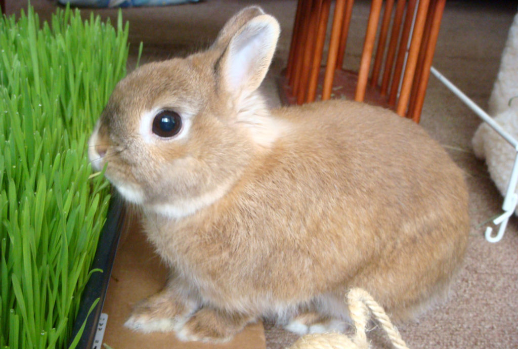 Мой кролик – он совсем как я!