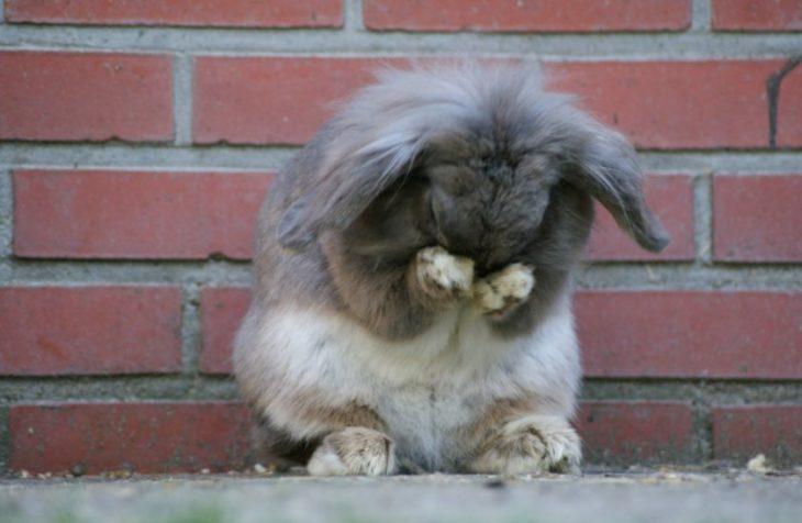 Обиженный кролик