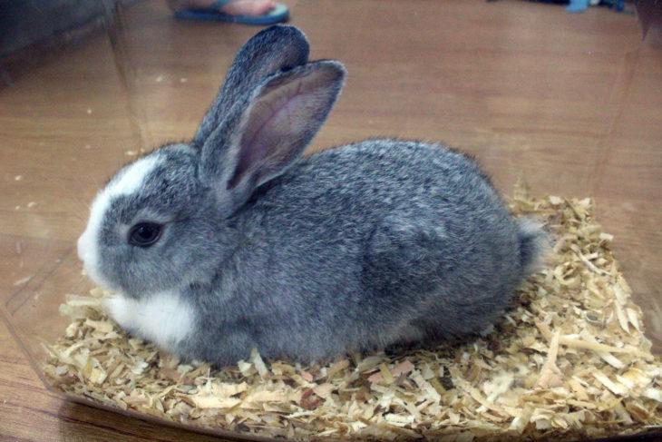 Лечение миксоматоза у кроликов