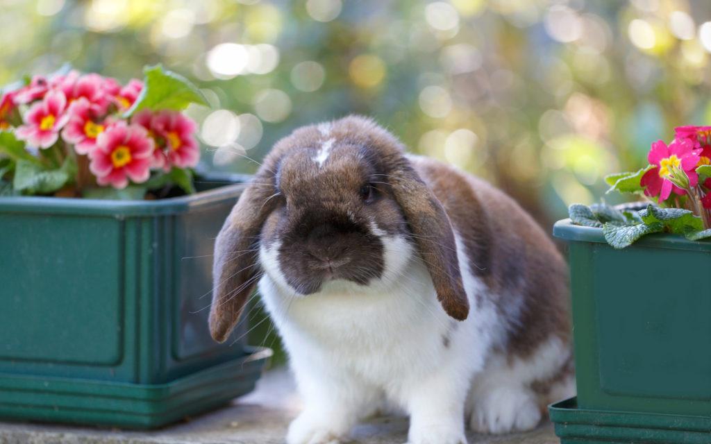 Можно ли давать кролику цитрусы?
