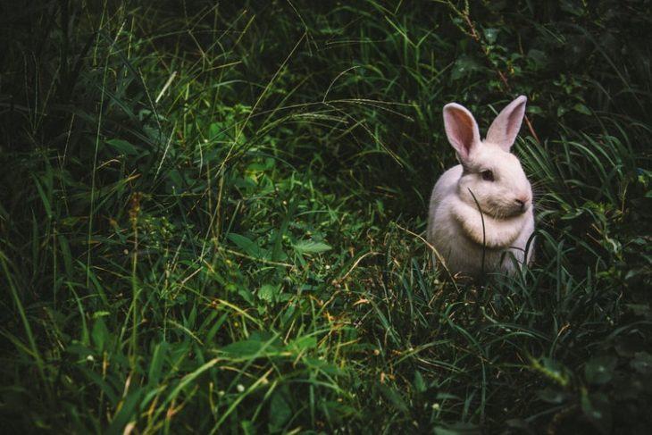 Кролик в лесу