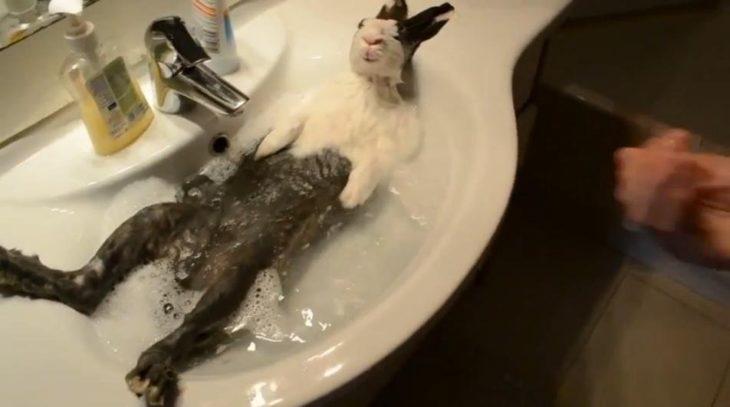 Кролик в раковине