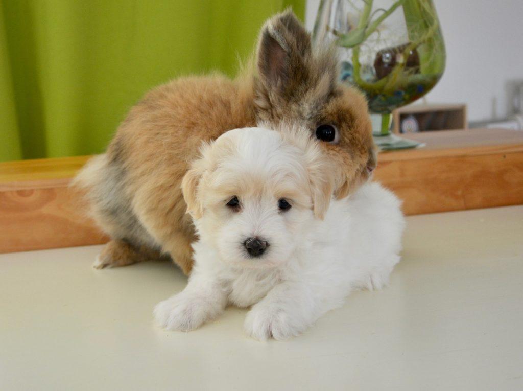 Кролик с щенком