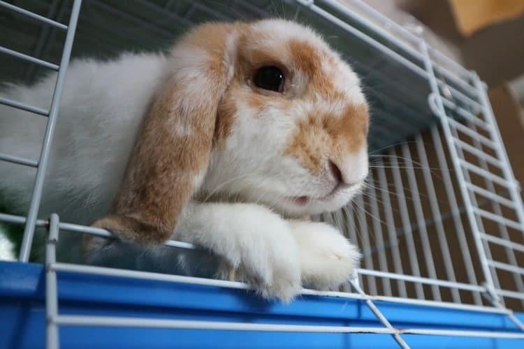 Приручить кролика