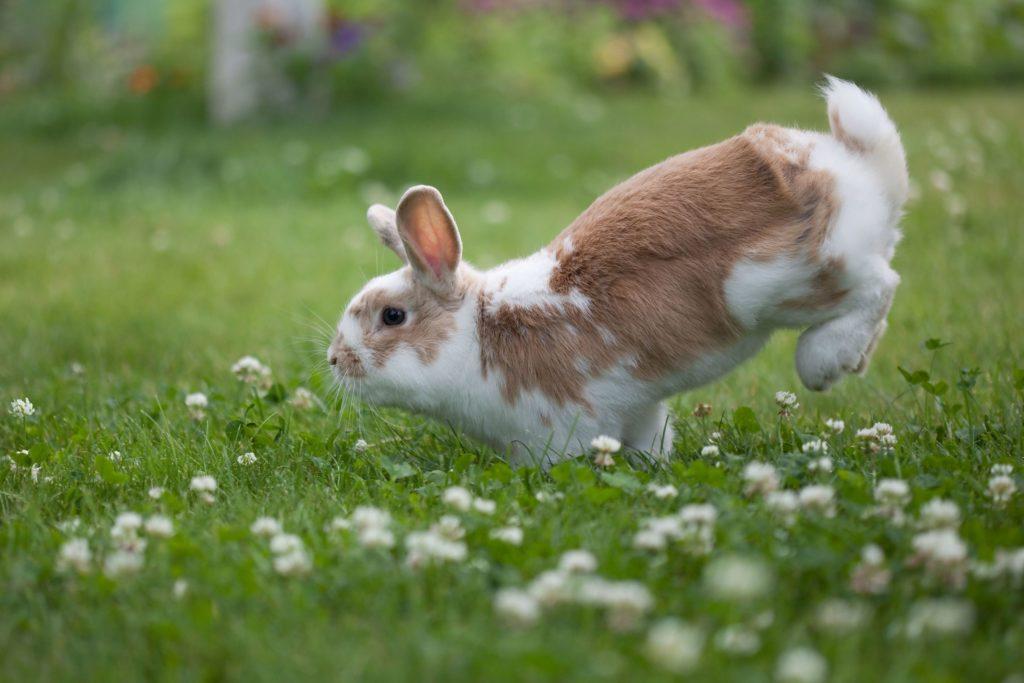 Корм для кроликов — можно ли молоко?