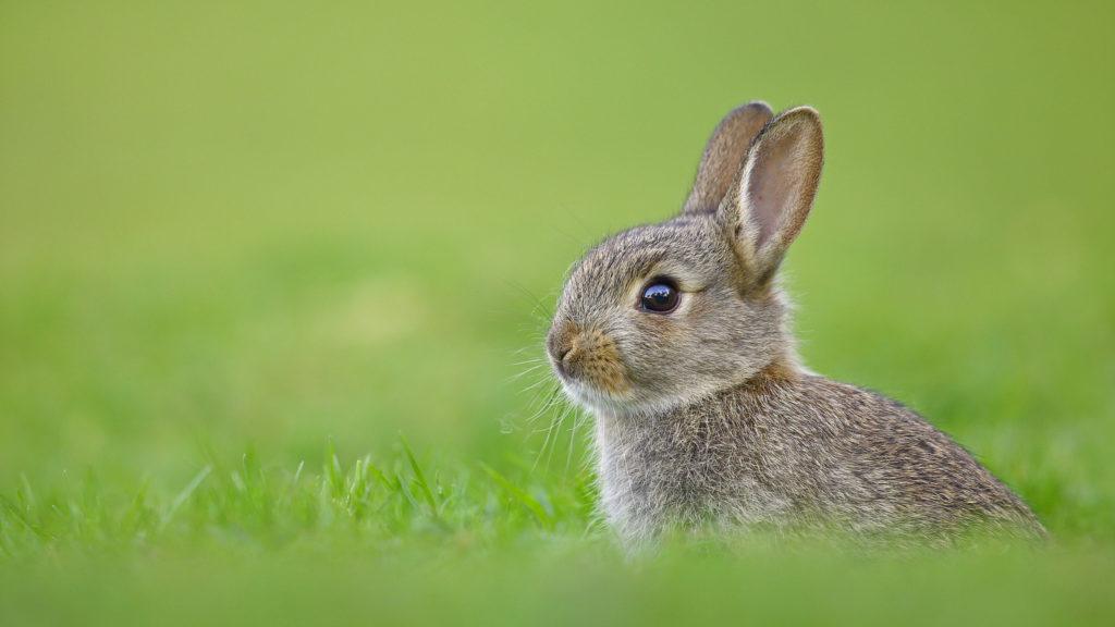 Сладкое в питании кроликов: что можно, а что нельзя