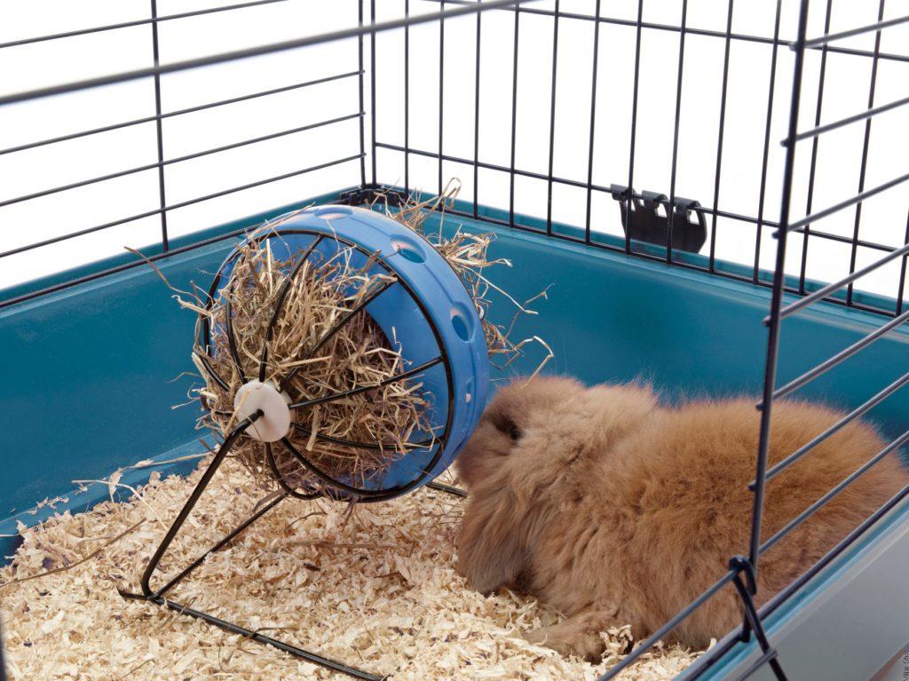 Рацион кормления кроликов и важность сена