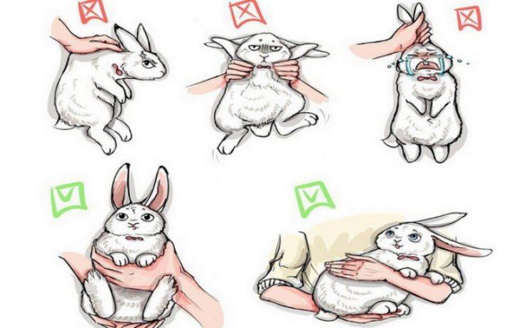 Как держать кролика
