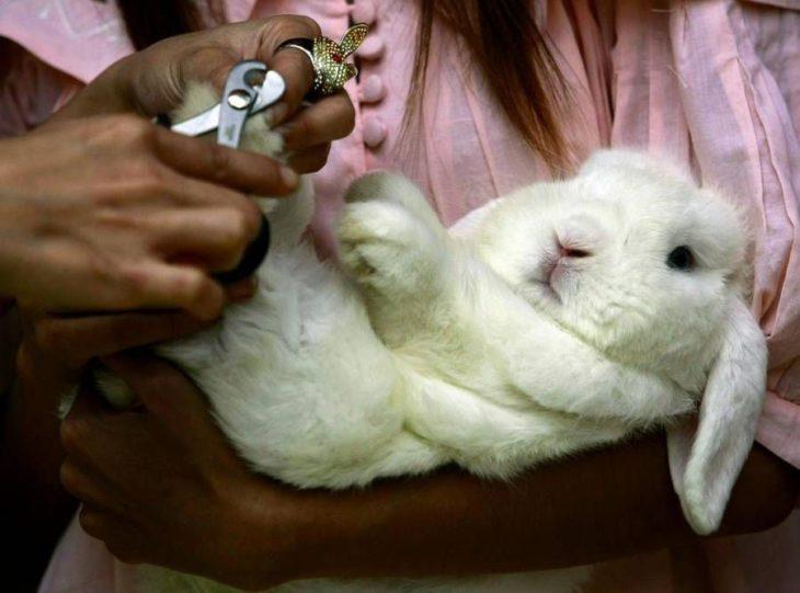 Как стричь ногти кролику