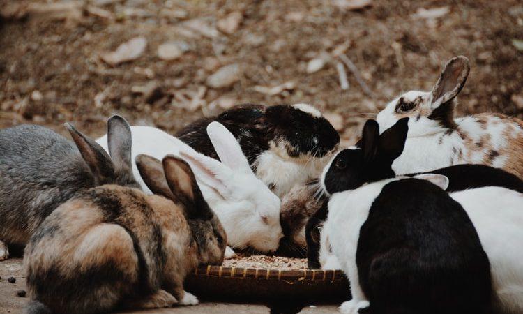 Карликовые кролики на прогулке — Ответы на вопросы