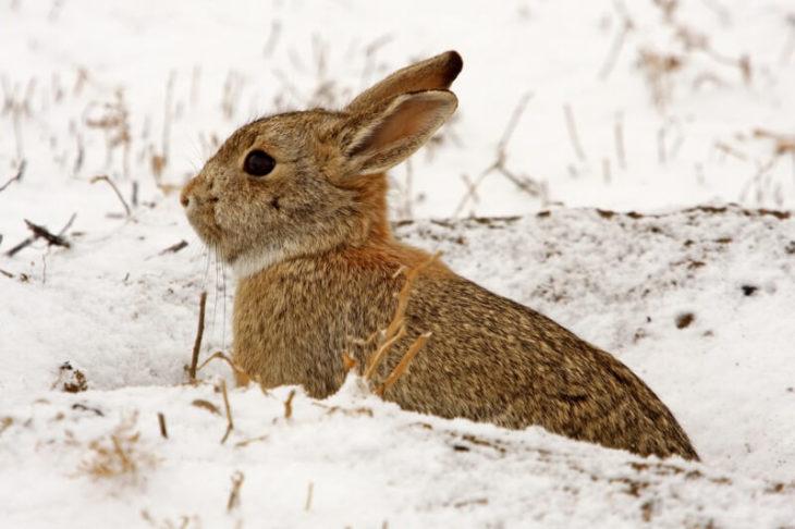 Кролик на зимней прогулке