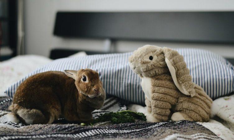 Нужна ли пара для кролика?