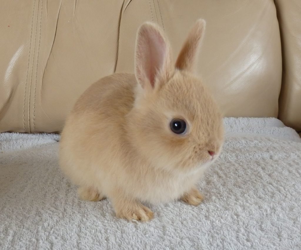 Возраст покупки кролика