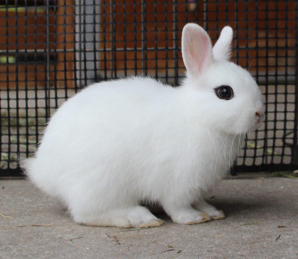 Как понять какой кролик?