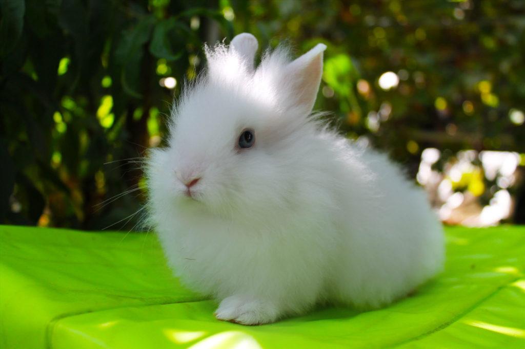 Как выглядит здоровый кролик