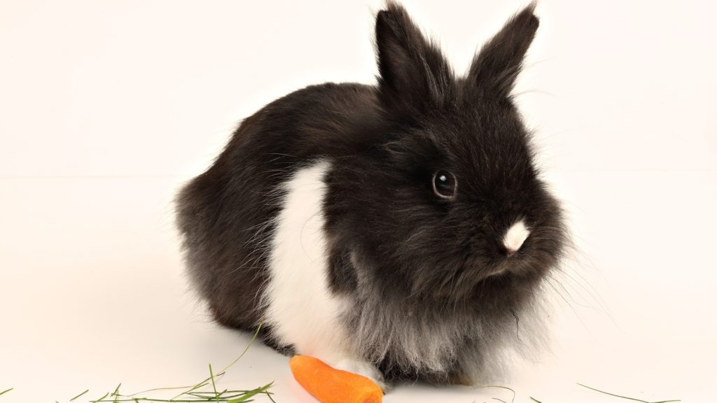 Шерсть в желудке у кролика