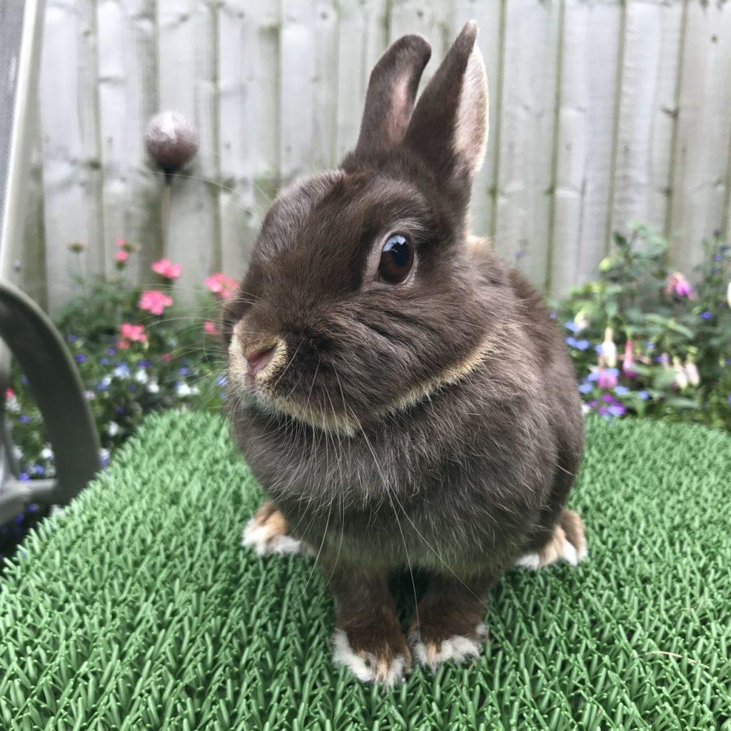 Прикус у кролика