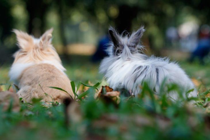 Декоративный кролик дома на прогулке: основные правила безопасности
