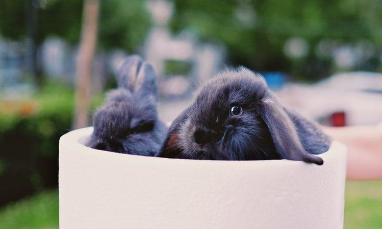 Уезжаем в отпуск — как быть с кроликом?