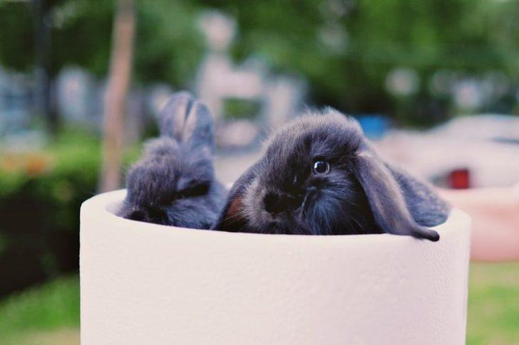 Кролик во время отпуска