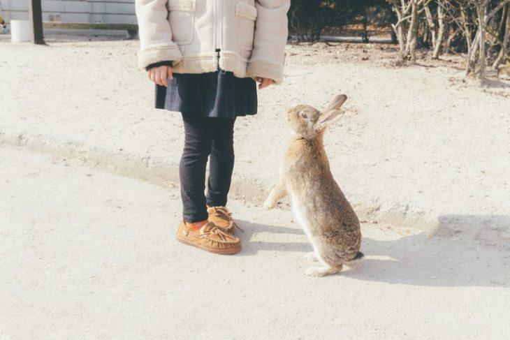 Выставка кроликов: как подготовить кролика к мероприятию