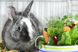 Кролик и зелень